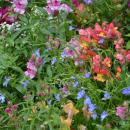 Музей-усадьба Ясная поляна, цветник рядом с домом Л.Н. Толстого