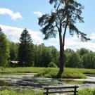 Усадьба Знаменское-Раек пруд в парке