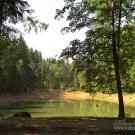 Усадьба Золино, пруд в парке