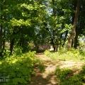 Усадьба Троицкое-Лобаново, фрагмент парка