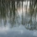 Ярославль, пруд в Петропавловском парке