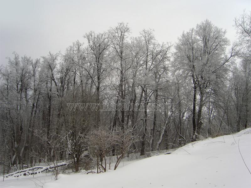 Усадьба Доршево, фрагмент парка