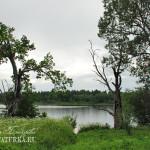 Усадьба Михайловское (Торопецкий район, Тверская область). Вид на озеро от усадебного дома