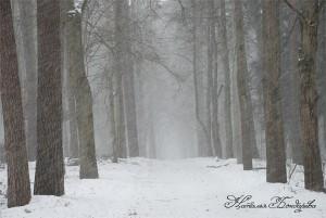 Парк хутора Турлики